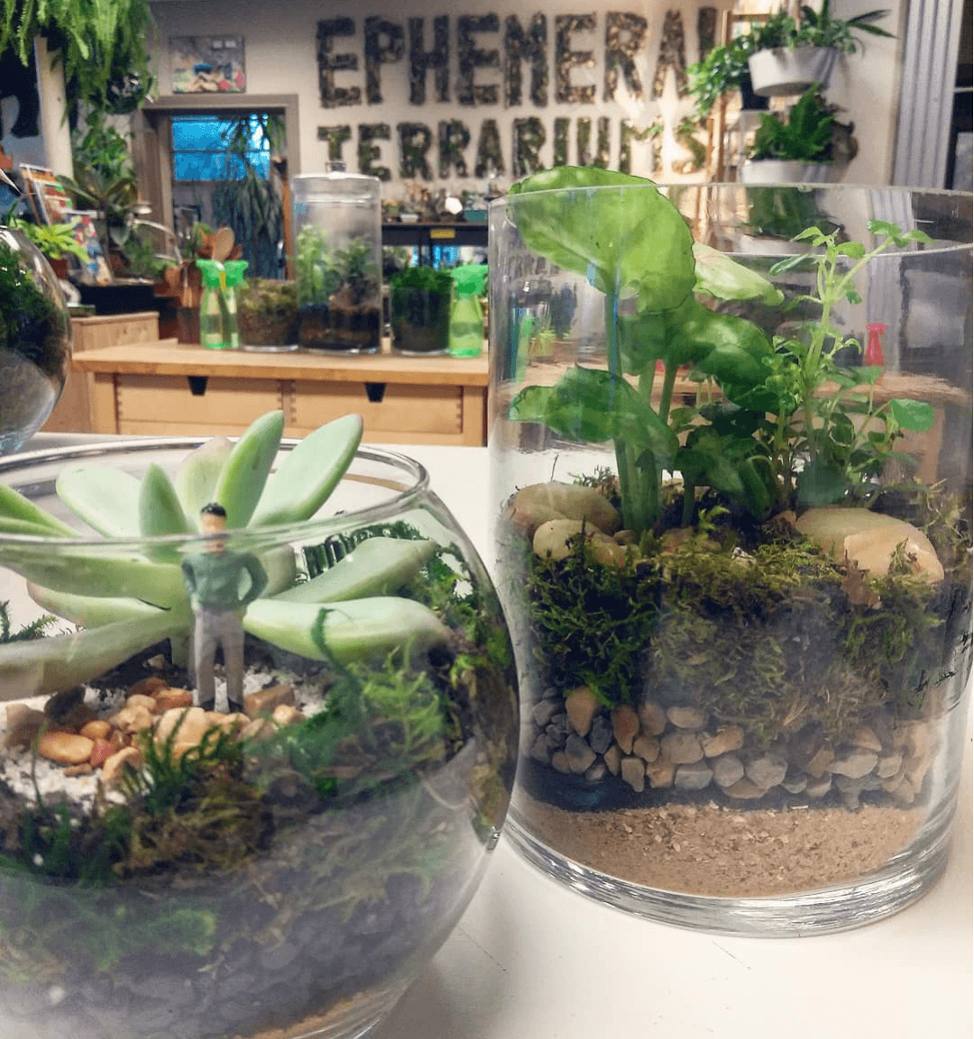 Make Your Own Terrarium at Bare Arms Brewing