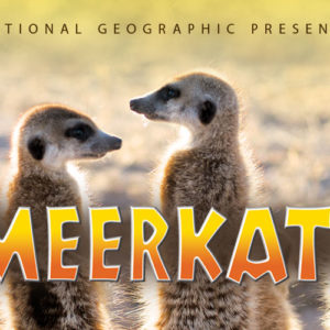 Meerkats at the Mayborn Museum Theatre
