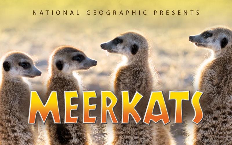 Meerkats at the Mayborn Museum Theatre