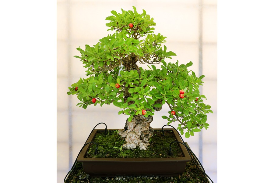 Lunch with the Masters: All About Bonsai